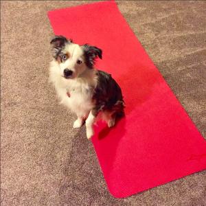 Dog on Yoga Mat